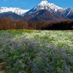 八ヶ岳共同農場(ファームシェアリング)