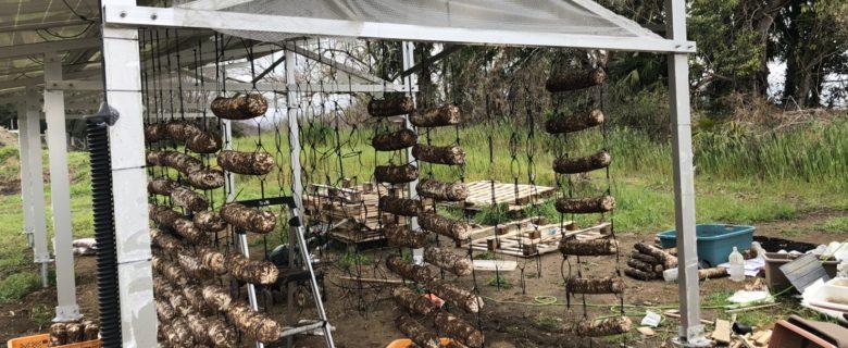 車椅子での縄はしごシイタケ栽培